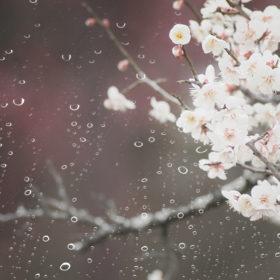 着物の雨の染み予防の対策5つ